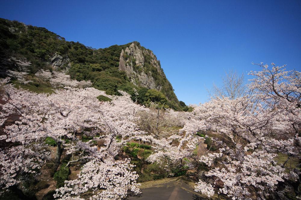 御船山楽園桜.jpg